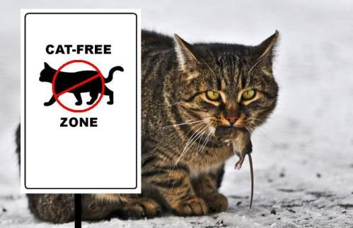 Cat-free at last; cat-free at last; cat-free at last!
